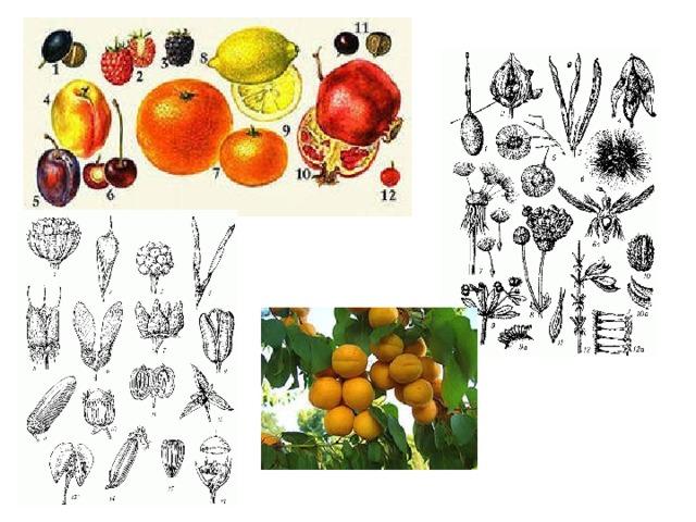 Картинка онтогенез растения растений