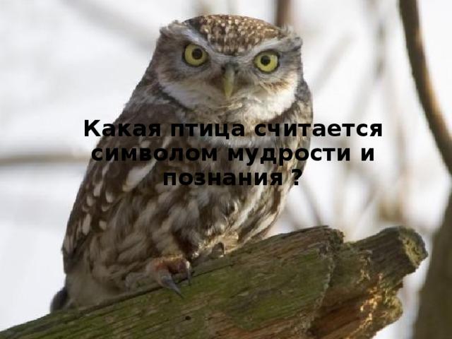 Какая птица считается символом мудрости и познания ?