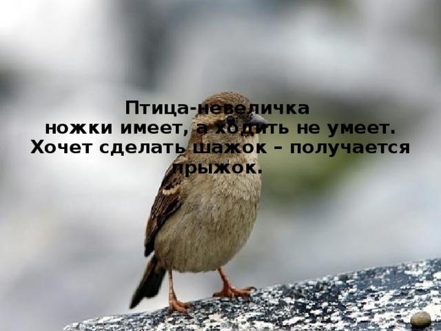 Птица-невеличка  ножки имеет, а ходить не умеет.  Хочет сделать шажок – получается прыжок.