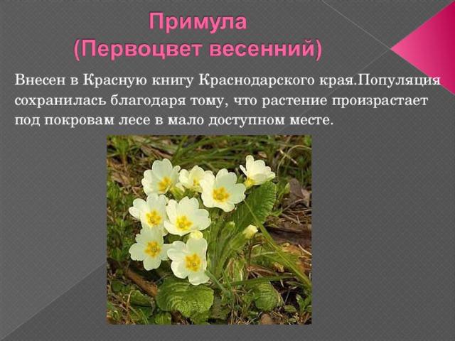 картинки растений из красной книги краснодарского края кормушки для
