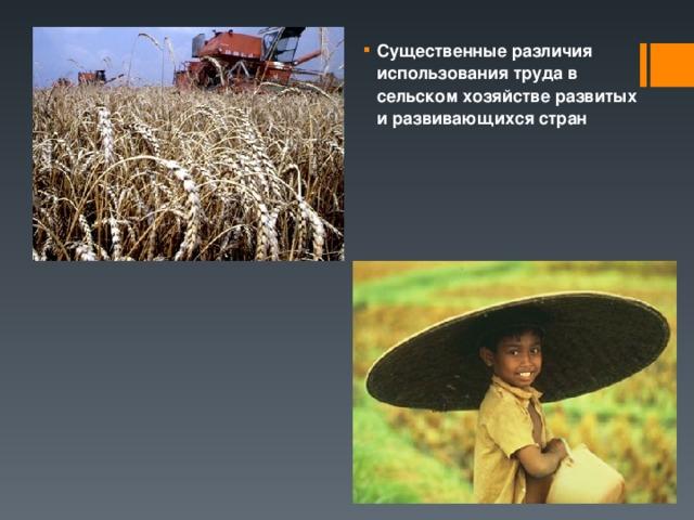 Существенные различия использования труда в сельском хозяйстве развитых и развивающихся стран