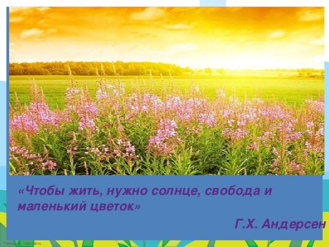 «Чтобы жить, нужно солнце, свобода и маленький цветок» Г.Х. Андерсен