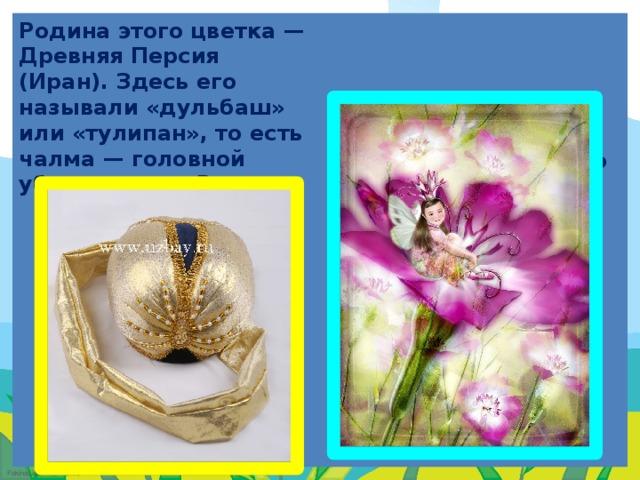 Родина этого цветка — Древняя Персия (Иран). Здесь его называли «дульбаш» или «тулипан», то есть чалма — головной убор народов Востока.  В Англии считали, что тюльпан служит колыбелькой для маленьких эльфов и фей.