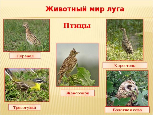 животные луга картинки с названиями минусовую температуру