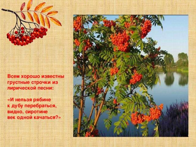 недорогих рябина стихи русских поэтов шеф-повар