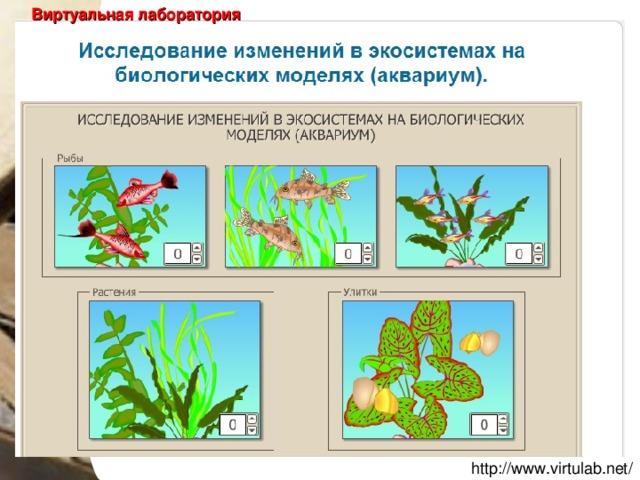 Практическая работа исследование изменений в экосистемах на биологических моделях irina model