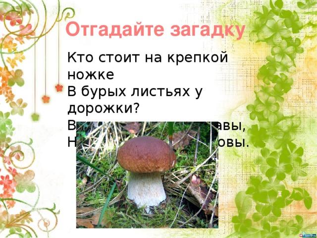 Отгадайте загадку Кто стоит на крепкой ножке  В бурых листьях у дорожки?  Встала шапка из травы,  Нет под шапкой головы.