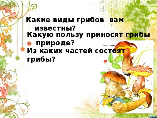 Какие виды грибов вам известны? Какую пользу приносят грибы природе? Из каких частей состоят грибы?