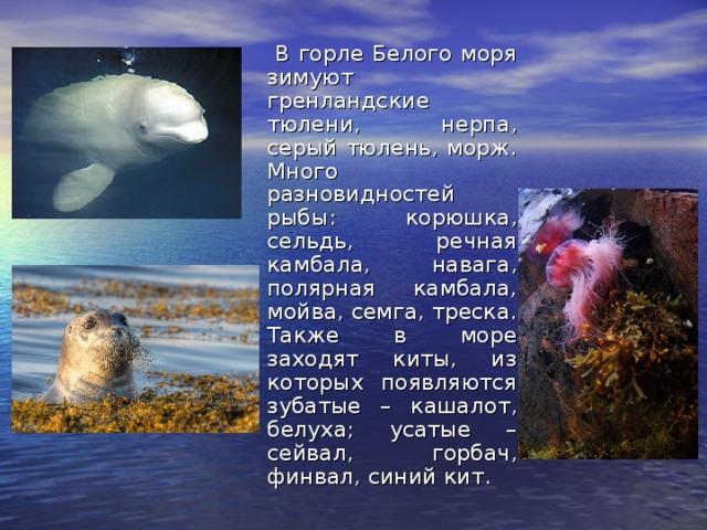 рыбы баренцевого моря фото и краткое описание делают случаях, когда