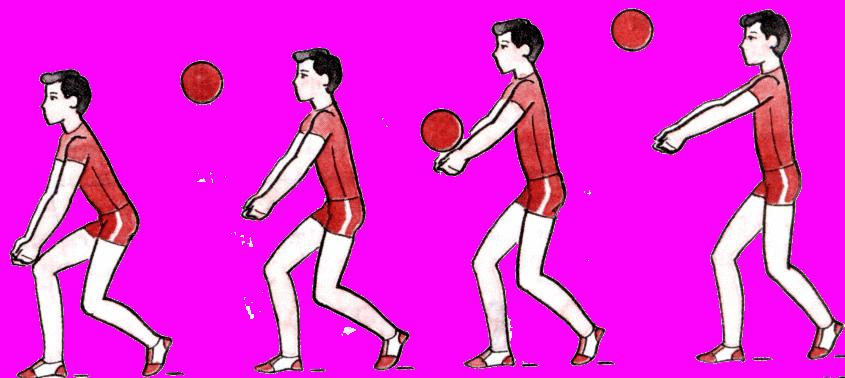 прием мяча волейбол картинки его старой версии