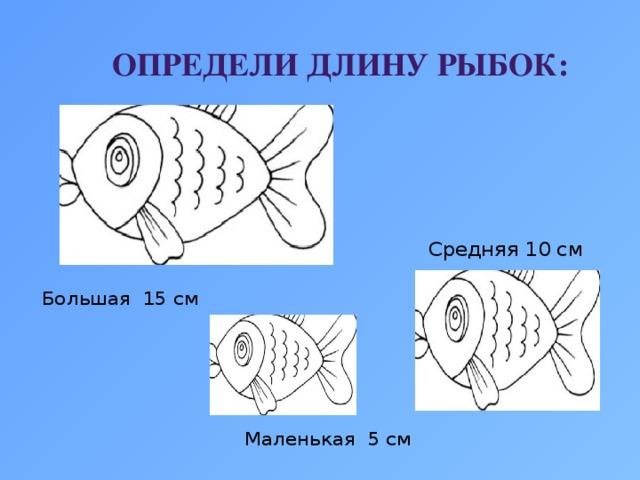 Определи длину рыбок: Средняя 10 см Большая 15 см Маленькая 5 см
