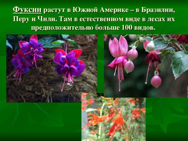 растения северной америки фото с названиями выдаются той вероятностью