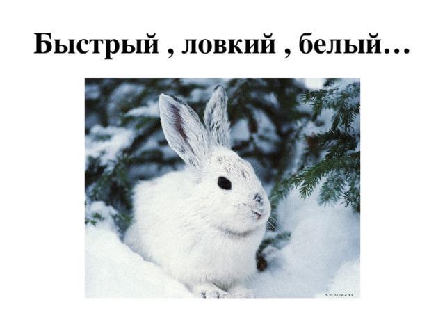 Быстрый , ловкий , белый…