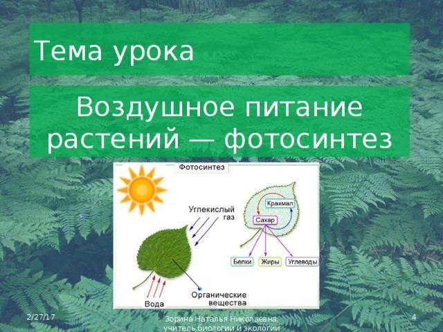 места вызывают фотосинтез как тип питания выполнена приближенно оригиналу