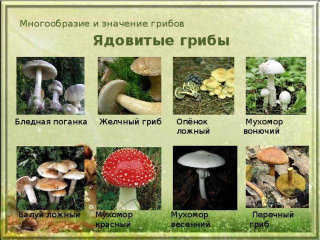 Фото и описание несъедобных грибов