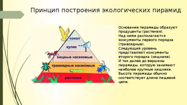 экологические пирамиды работа с пирамидой моделью