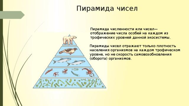 Экологические пирамиды работа с пирамидой моделью работа в россии девушка