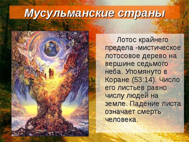 Мусульманские страны   Лотос крайнего предела -мистическое лотосовое дерево на вершине седьмого неба. Упомянуто в Коране (53:14). Число его листьев равно числу людей на земле. Падение листа означает смерть человека.