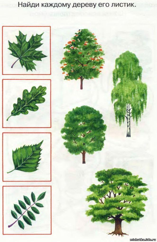 дидактические картинки деревья и кустарники