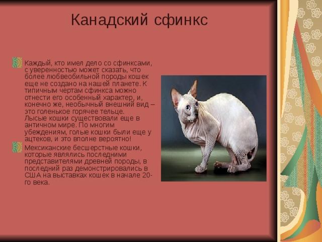 сфинкс характер описание и фото способны