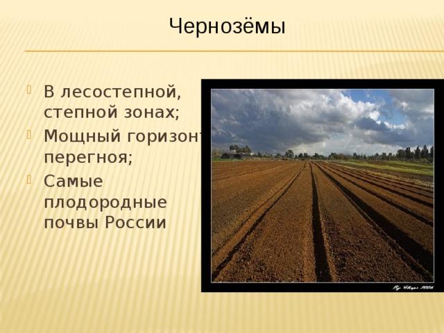 Почвы в россии в зоне степей
