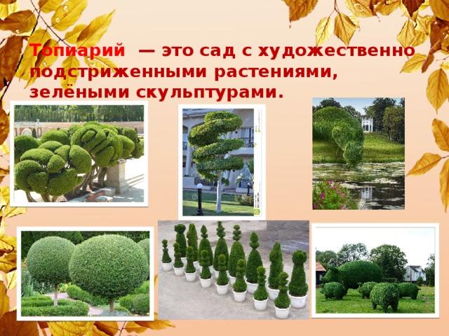 Топиарий — это сад с художественно подстриженными растениями, зелёными скульптурами.
