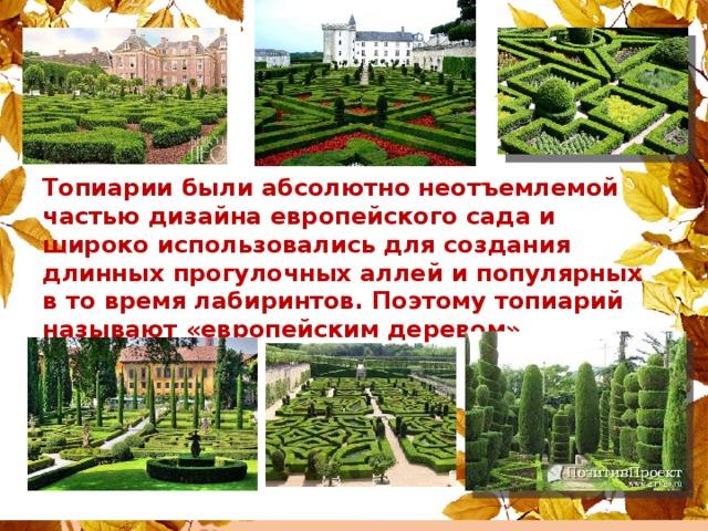 Топиарии были абсолютно неотъемлемой частью дизайна европейского сада и широко использовались для создания длинных прогулочных аллей и популярных в то время лабиринтов. Поэтому топиарий называют «европейским деревом»