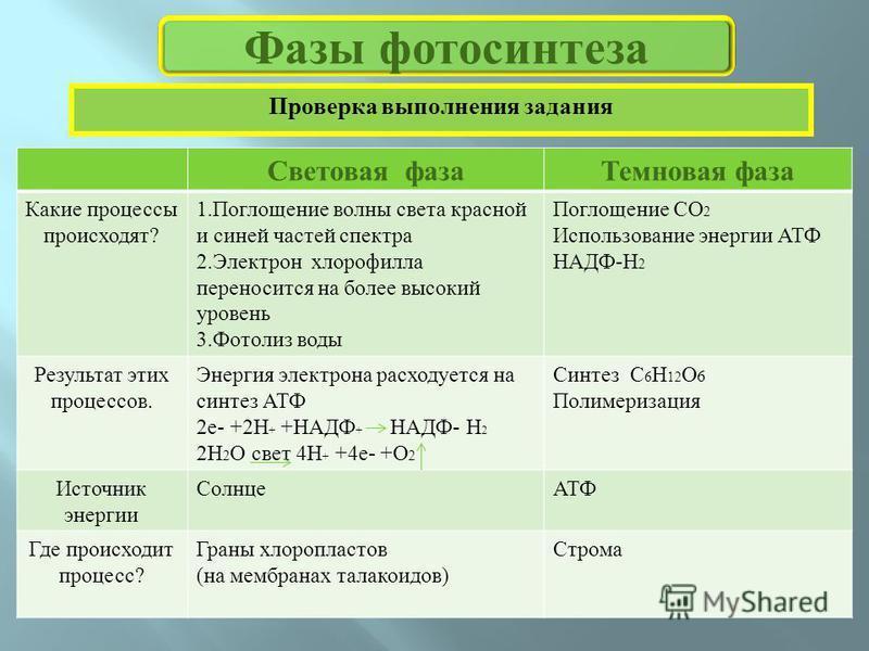 Зависимость фотосинтеза от внешних условий кратко прошли