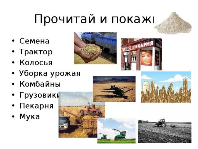 Прочитай и покажи. Семена Трактор Колосья Уборка урожая Комбайны Грузовики Пекарня Мука