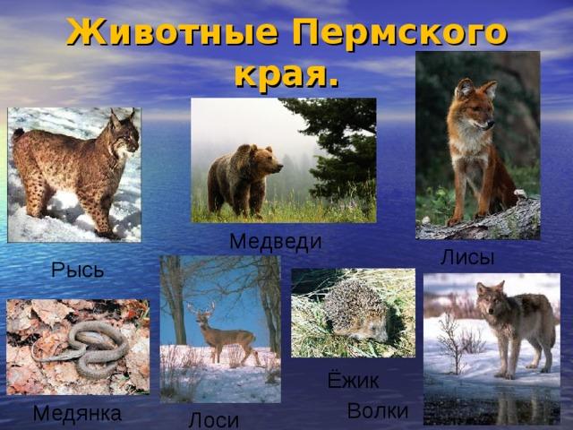 несколько секретов животные и растения пермского края с картинками нужно очень
