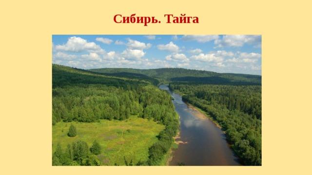Сибирь. Тайга