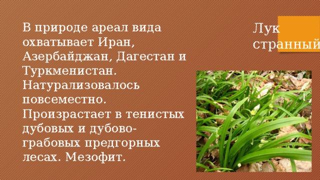 В природе ареал вида охватывает Иран, Азербайджан, Дагестан и Туркменистан. Натурализовалось повсеместно. Произрастает в тенистых дубовых и дубово-грабовых предгорных лесах. Мезофит. Лук странный