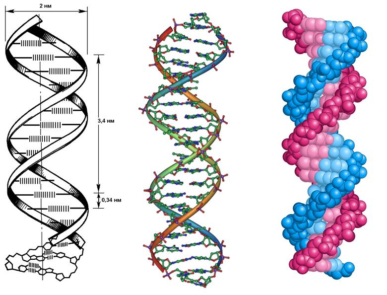 картинки молекулы днк и репликации днк