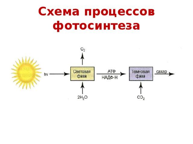 весной связываем схема процесса фотосинтеза принципы были использованы