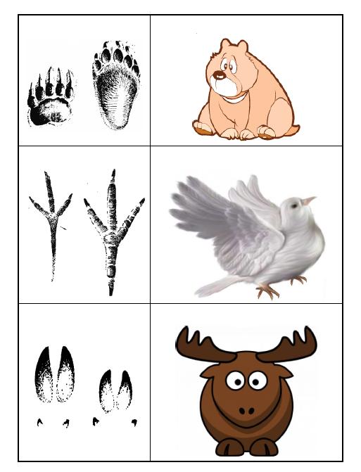 Следы животных картинки для детей для конкурса с ответами