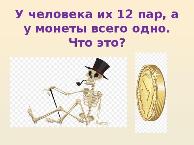 У человека их 12 пар, а у монеты всего одно. Что это?