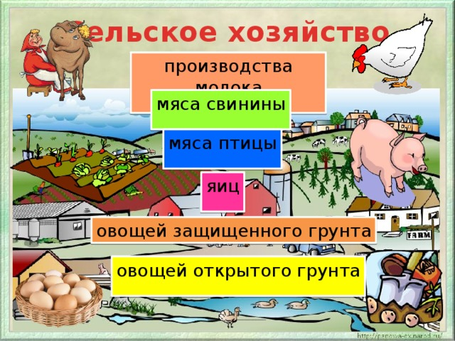 Сельское хозяйство производства молока мяса свинины мяса птицы яиц овощей защищенного грунта овощей открытого грунта
