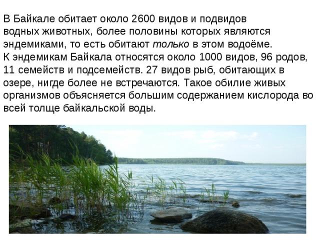 В Байкале обитает около 2600 видов и подвидов водных животных, более половины которых являются эндемиками, то есть обитают только в этом водоёме. К эндемикам Байкала относятся около 1000 видов, 96 родов, 11 семейств и подсемейств. 27 видов рыб, обитающих в озере, нигде более не встречаются. Такое обилие живых организмов объясняется большим содержанием кислорода во всей толще байкальской воды.