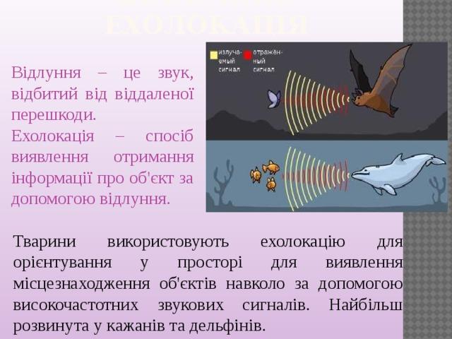 Відлуння. Ехолокація   Відлуння – це звук, відбитий від віддаленої перешкоди. Ехолокація – спосіб виявлення отримання інформації про об'єкт за допомогою відлуння. Тварини використовують ехолокацію для орієнтування у просторі для виявлення місцезнаходження об'єктів навколо за допомогою високочастотних звукових сигналів. Найбільш розвинута у кажанів та дельфінів.