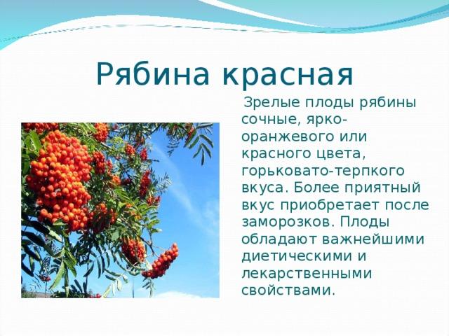 Рябина красная   Зрелые плоды рябины сочные, ярко-оранжевого или красного цвета, горьковато-терпкого вкуса. Более приятный вкус приобретает после заморозков. Плоды обладают важнейшими диетическими и лекарственными свойствами.