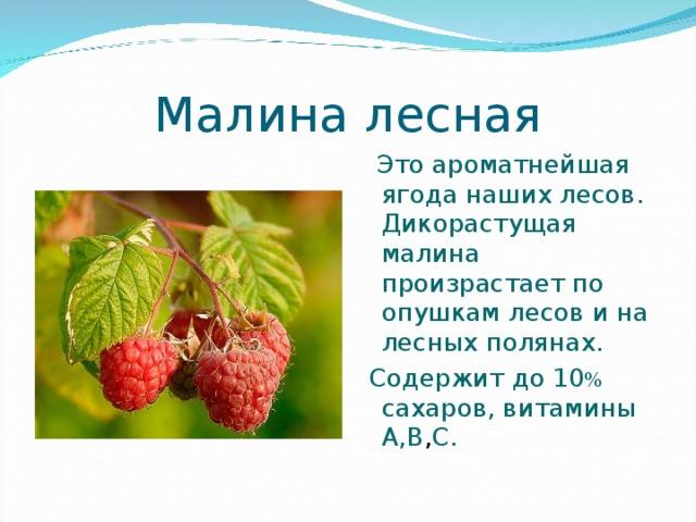 Малина лесная  Это ароматнейшая ягода наших лесов. Дикорастущая малина произрастает по опушкам лесов и на лесных полянах.  Содержит до 10 % сахаров, витамины А,В , С.