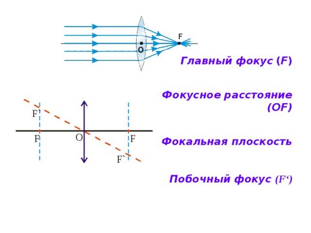 Главный фокус  ( F )    Фокусное расстояние (ОF)    Фокальная плоскость      Побочный фокус (F ' )