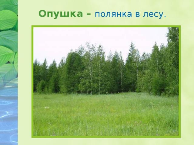 Опушка – полянка в лесу.