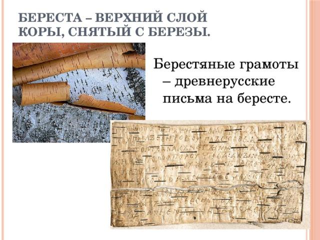 Береста – верхний слой  коры, снятый с березы. Берестяные грамоты – древнерусские письма на бересте.