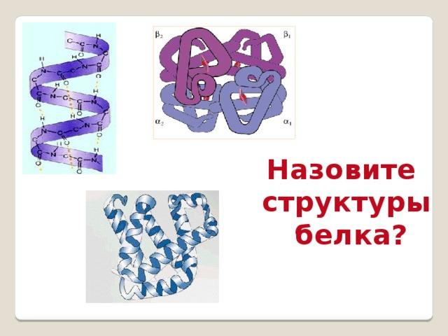 Назовите структуры  белка?