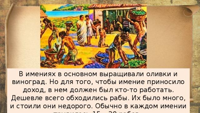 В имениях в основном выращивали оливки и виноград. Но для того, чтобы имение приносило доход, в нем должен был кто-то работать. Дешевле всего обходились рабы. Их было много, и стоили они недорого. Обычно в каждом имении трудилось 15 – 20 рабов.