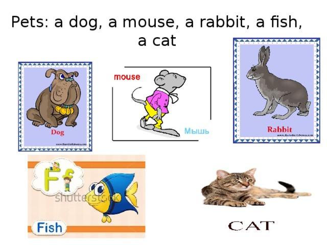 Pets: a dog, a mouse, a rabbit, a fish, a cat