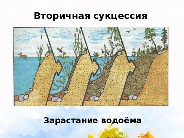 Вторичная сукцессия  Зарастание водоёма