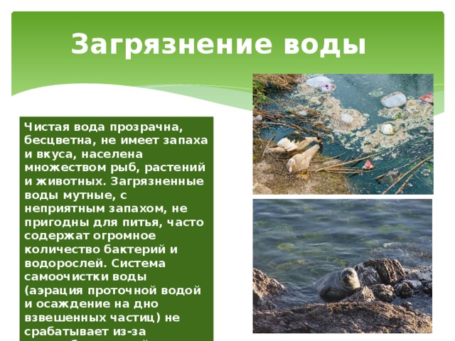 Загрязнение воды Чистая вода прозрачна, бесцветна, не имеет запаха и вкуса, населена множеством рыб, растений и животных. Загрязненные воды мутные, с неприятным запахом, не пригодны для питья, часто содержат огромное количество бактерий и водорослей. Система самоочистки воды (аэрация проточной водой и осаждение на дно взвешенных частиц) не срабатывает из-за переизбытка в ней антропогенных загрязнителей .