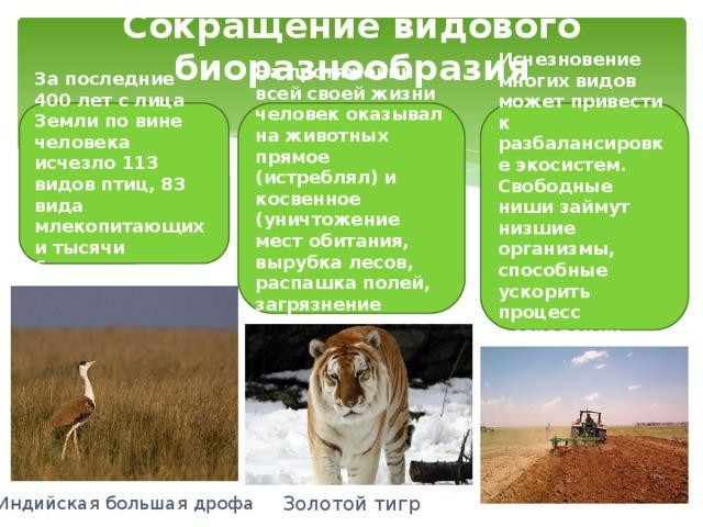 Сокращение видового биоразнообразия За последние 400 лет с лица Земли по вине человека исчезло 113 видов птиц, 83 вида млекопитающих и тысячи беспозвоночных. На протяжении всей своей жизни человек оказывал на животных прямое (истреблял) и косвенное (уничтожение мест обитания, вырубка лесов, распашка полей, загрязнение среды) воздействия. Исчезновение многих видов может привести к разбалансировке экосистем. Свободные ниши займут низшие организмы, способные ускорить процесс деградации живых сообществ. Индийская большая дрофа Золотой тигр
